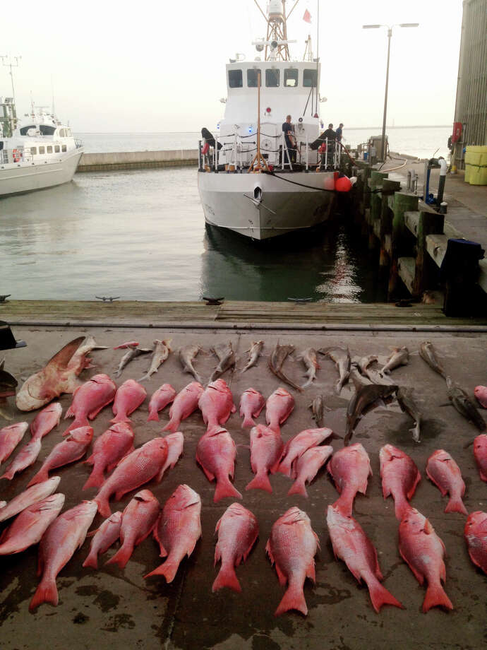 16 sharks and 45 snapper were found on board the intercepted fishing vessel.  The crew of 4 Mexican nationals admitted illegally fishing in U.S. Waters. Photo: CGC Amberjack, US Coast Guard / Public Domain