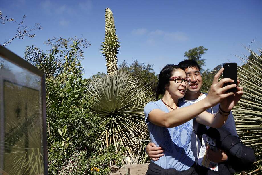 Lan Nguyan and Jeff Wu of Berkeley take a selfie with the specimen as the Queen of the Andes begins to blossom. Photo: Michael Short, The Chronicle