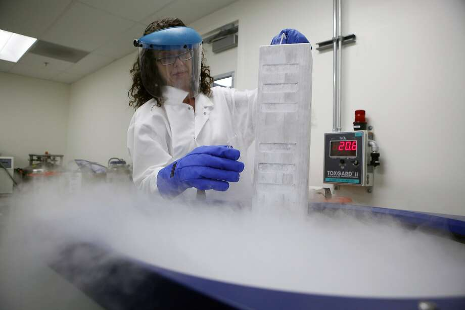 Director of Neurobiology Alexandra Capela displays a case of neural stem cells in a liquid nitrogen case, above, at Stem Cells Inc. in Newark. Photo: Michael Short, The Chronicle