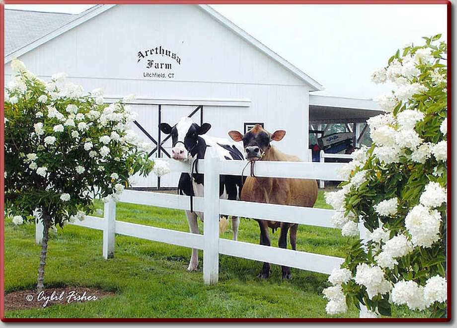 Arethusa Dairy Farm in Litchfield is owned by life partners George Malkemus and Anthony Yurgaitis, president and vice president of high end Manolo Blahnik shoes.