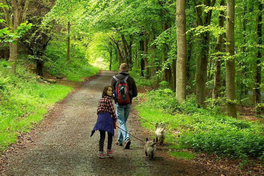 A girl and her father walk their dogs on John Muir Way, which passes through the estate of the Earl of Rosebery. Photo: Special To The Chronicle