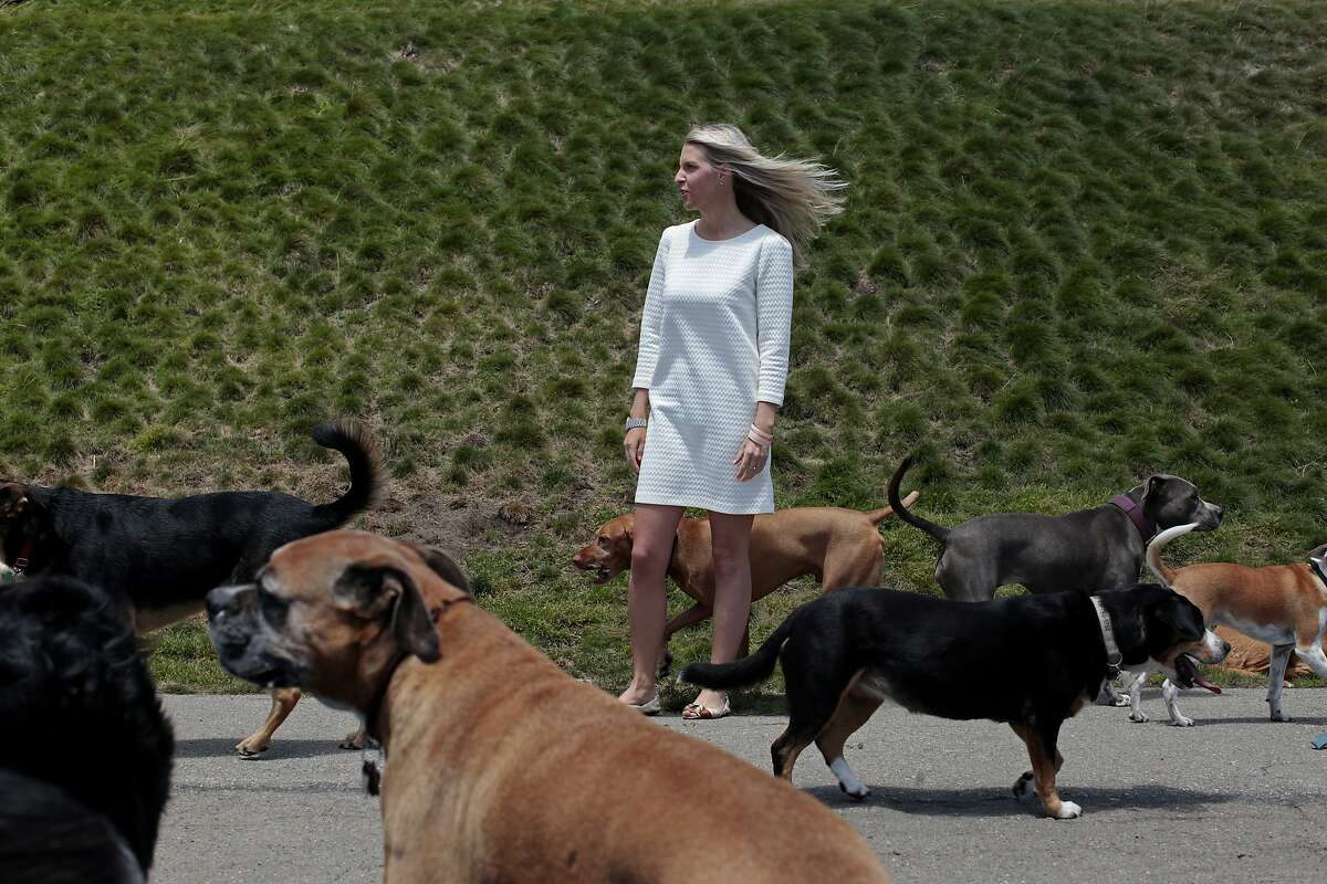 Wendy Willbanks stands among dogs during their afternoon walk in Alta Plaza Park in San Francisco, Calif. on Wednesday, June 2, 2014. Willbanks' business helps renters to find apartments in the city that allow pets.