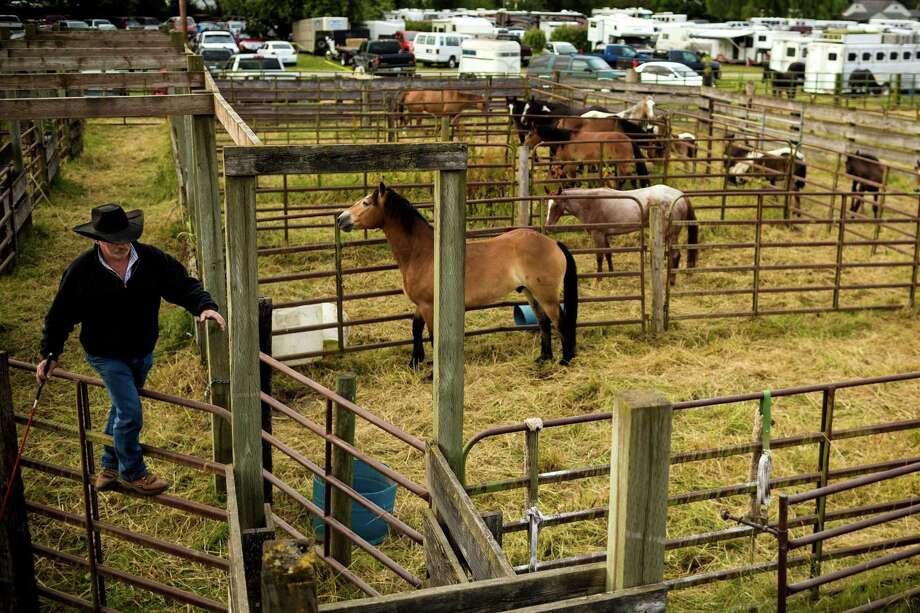 Americana S Finest Sedro Woolley Rodeo 2014 Seattlepi Com