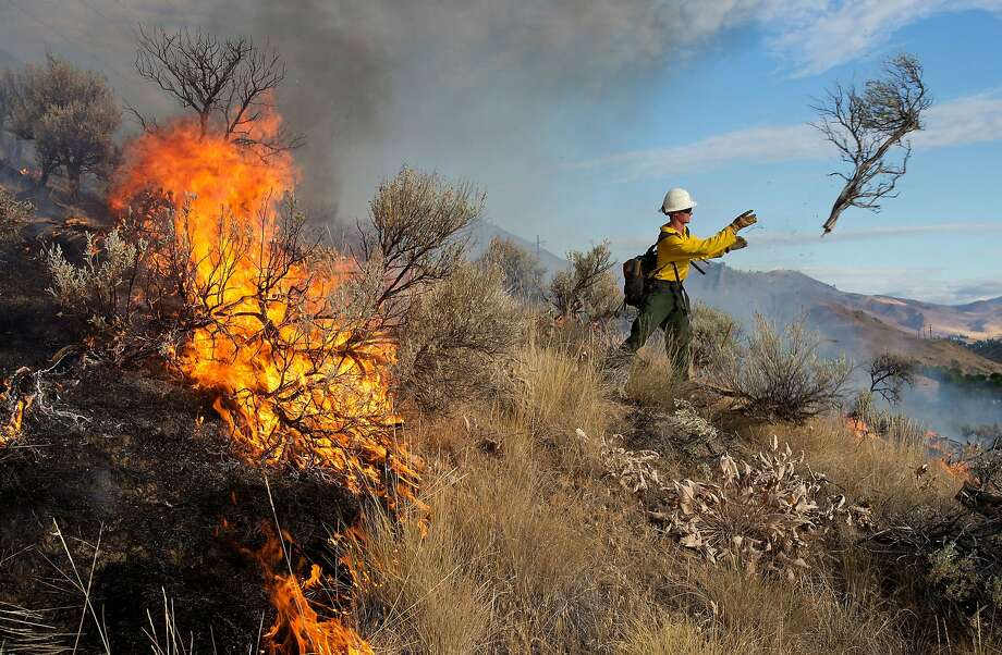 Matt Howard throws sagebrush clear of the fire line as a wildfire threatens eight homes on Skyline Drive in Wenatchee, Wash., early Sunday morning, July 6, 2014. He is a firefighter for the forest service based out of the Entiat Ranger District. Fire officials told residents to be ready to evacuate as the wildfire spread to several ridge lines behind the community on Sunday morning. (AP Photo/The Wenatchee World, Don Seabrook) Photo: Don Seabrook, Associated Press