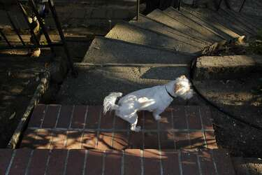 Pet owners struggle as fewer S F  landlords allow dogs, cats
