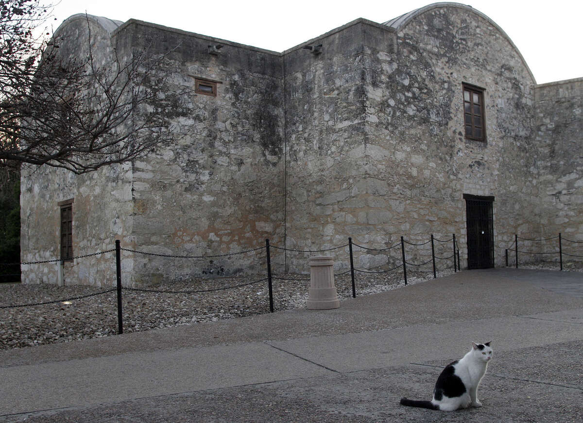 C.C., the Alamo Cat, resides at Texas' most well known landmark. C.C. tends to avoid the public spots during regular hours, preferring to prowl the grounds early and here, after hours, Saturday, March 19, 2007. ( Photo by J. Michael Short / SPECIAL )