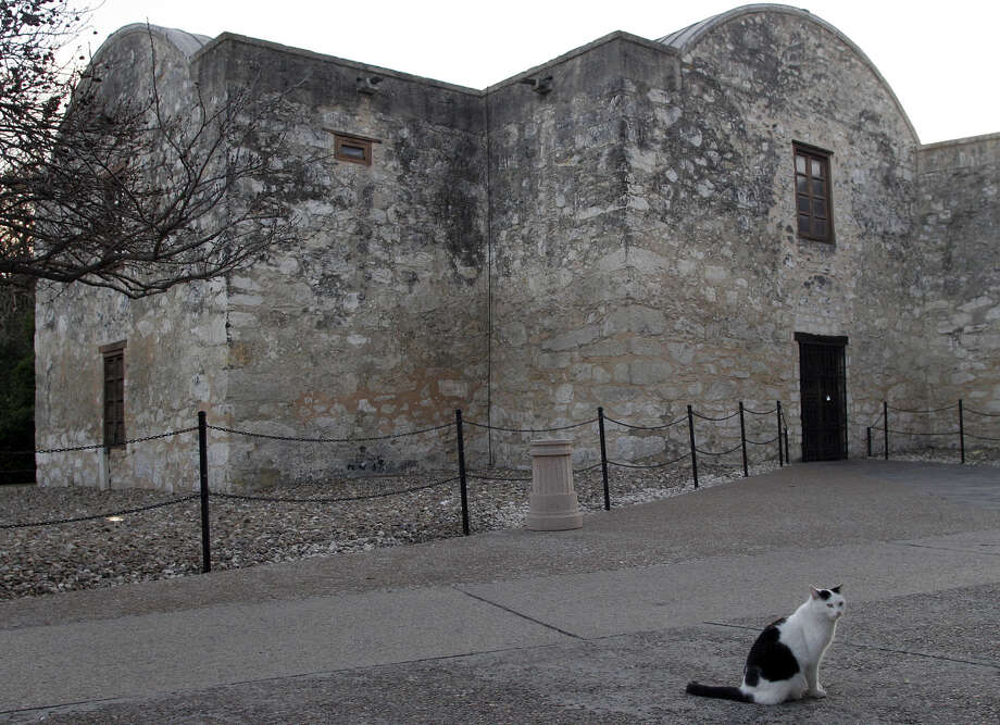 C.C. the Alamo cat, shown in 2007, was euthanized after becoming increasingly ill. She spent 18 years at the shrine. Photo: J. MICHAEL SHORT, SPECIAL TO THE EXPRESS-NEWS / SAN ANTONIO EXPRESS-NEWS