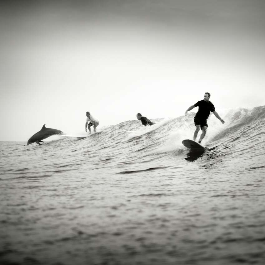 Surfing Dolphin, South Padre Island, 2012.