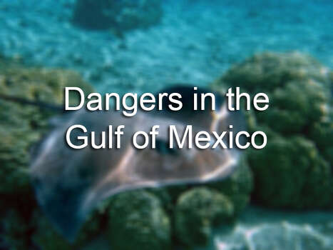These are some of the most dangerous marine animals found off the coast of Texas. Photo: AP