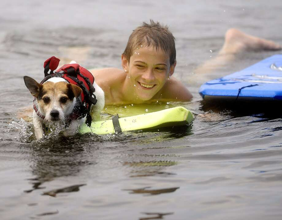 Flat water specialist:The waves that canine boogie boarder Pogo likes to surf with Kieran Mooney in Bolton, Conn., are   mostly ripples. Photo: Jim Michaud, Associated Press