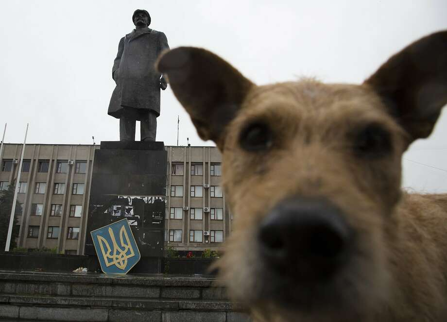 Wet nose photobomb! An AP photographer was trying to take a shot of Lenin's statue in the central square of Slovyansk, Ukraine, when he was interrupted. Photo: Dmitry Lovetsky, Associated Press
