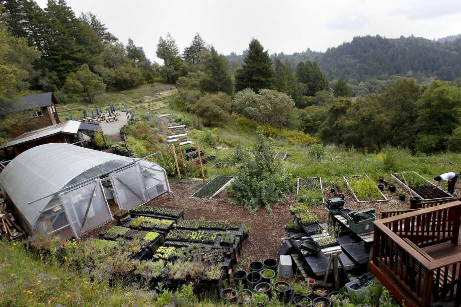 The farm set on a steep hillside uses terraces to provide flat growing areas.  2012. Photo: Brant Ward, The Chronicle