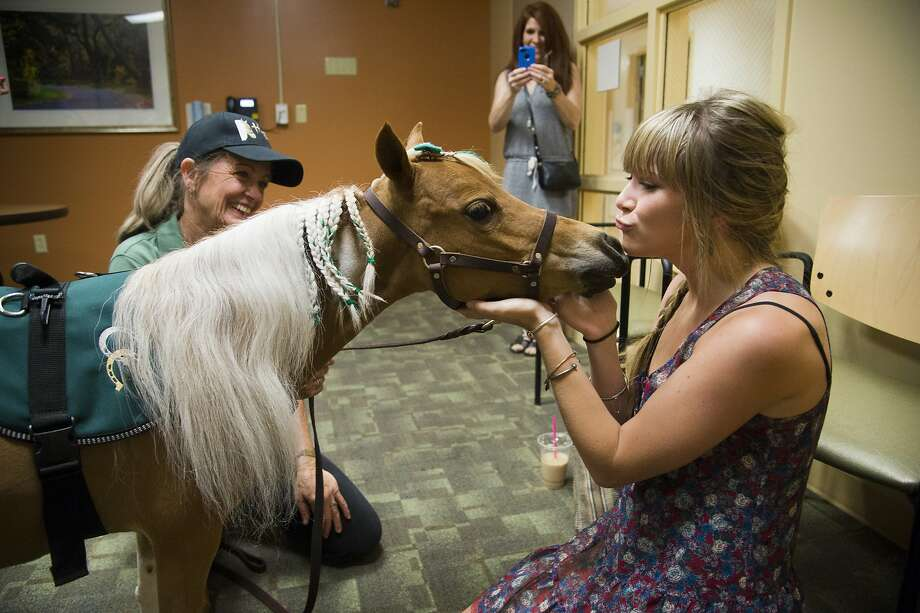 Samantha Leigon, 19, of Auburn, greets Hope, a miniature horse who has joined the team of Paws on Call therapy pets at at Sutter Medical Center Sacramento, Calif., on Tuesday, July 8, 2014. Leigon was a patient at the hospital a month ago when Hope made her first visit to the hospital. (AP Photo/The Sacramento Bee, Manny Crisostomo) Photo: Manny Crisostomo, Associated Press