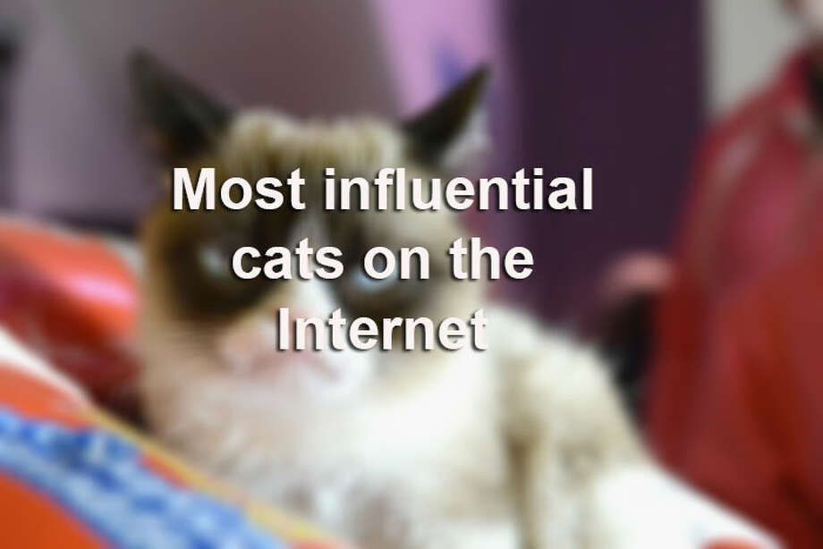 New cat stars are popping up on the Internet