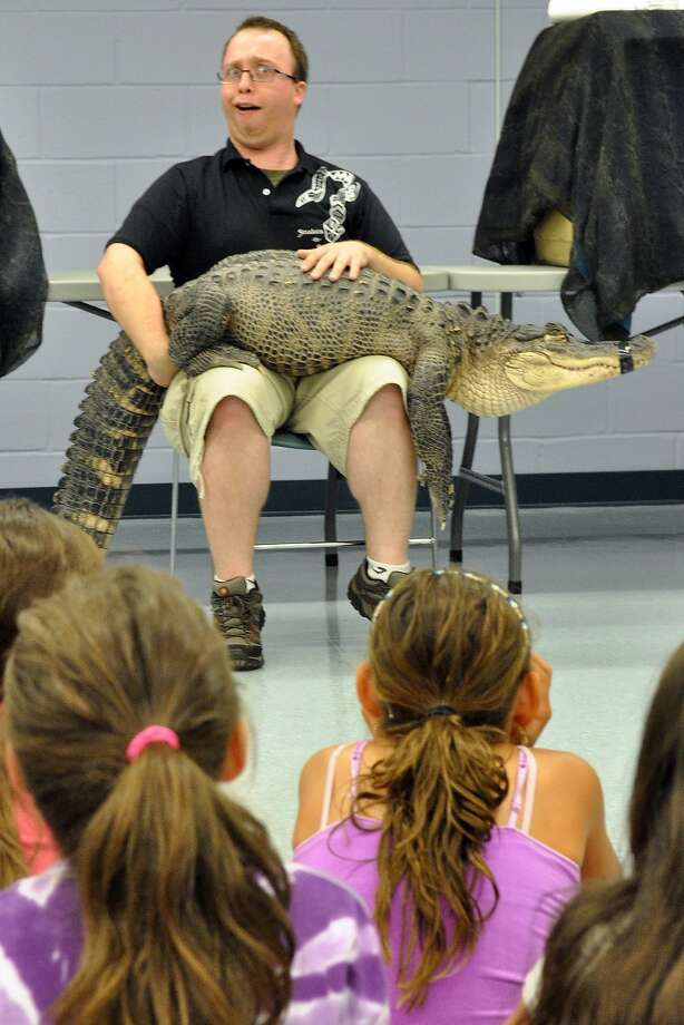 How do you like my new alligator belt, kids? Herpetologist Jack O'Donnell and Blue the lap alligator entertain and educate children at the library in Totowa, N.J. Photo: Demitrius Balevski, Associated Press