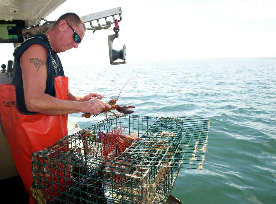 Mike Kalaman measures lobster on his boat, Dark Horse, on the Long Island Sound on Wednesday, July 9, 2014. Photo: Lindsay Perry / Stamford Advocate