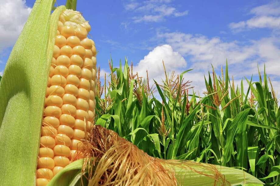 corn / smereka - Fotolia