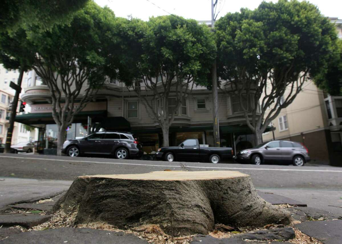 A stump is all that remains of a ficus tree at Hyde and Union streets in San Francisco on Wednesday, July 9, 2014, which fell on a parked car and briefly blocked the cable car line. Mature ficus trees, including the ones seen in the background, that line Hyde Street and other thoroughfares throughout the city have become a problem with frequent