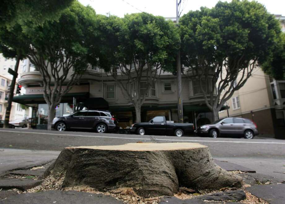 "A stump is all that remains of a ficus tree at Hyde and Union streets in San Francisco on Wednesday, July 9, 2014, which fell on a parked car and briefly blocked the cable car line. Mature ficus trees, including the ones seen in the background, that line Hyde Street and other thoroughfares throughout the city have become a problem with frequent ""limb failures."" Photo: Paul Chinn / The Chronicle / ONLINE_YES"