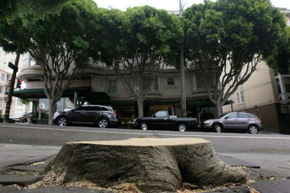 "A stump is all that remains of a ficus tree at Hyde and Union streets in San Francisco on Wednesday, July 9, 2014, which fell on a parked car and briefly blocked the cable car line. Mature ficus trees, including the ones seen in the background, that line Hyde Street and other thoroughfares throughout the city have become a problem with frequent ""limb failures."""