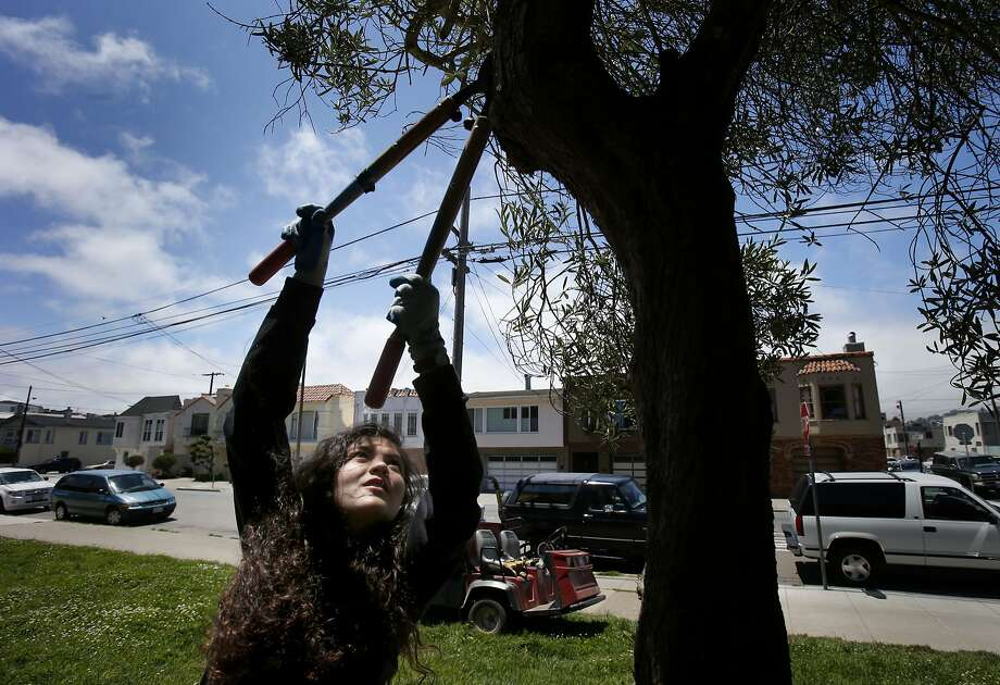 "Miriam Myers, trimming an olive tree, says the Greenagers program ""really opened my eyes."" Photo: Brant Ward, San Francisco Chronicle"