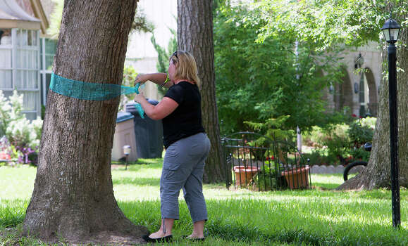A woman, who wishes not to be named, wraps  a ribbon around a tree in her front yard along Leaflet Lane after seven people were shot, Thursday, July 10, 2014, in Spring. The shooting took place Wednesday killing six people including four children and two adults, who were shot to death after an apparent domestic dispute. Photo: Cody Duty, Houston Chronicle / © 2014 Houston Chronicle