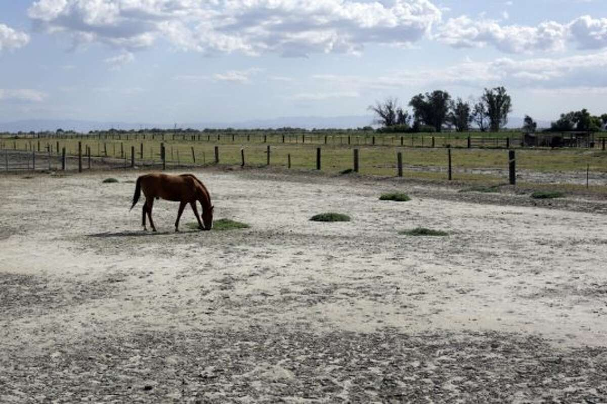 In this May 6, 2014 photo, a horse grazes at a ranch near Merced County, Calif. In dry California, water is fetching record high prices. As drought has deepened in the last few months, a handful of special districts in the state's agricultural heartland have made millions through auctions of their private, underground caches that go to the highest bidders. With the unregulated, erratic water market heating up in anticipation of the hot summer months, the price is only going up. In the last five years alone, it has grown tenfold, shooting to as much as $2,200 an acre foot.