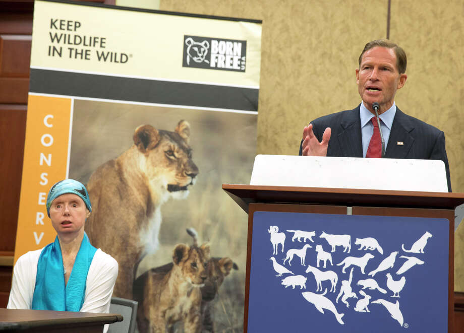 Sen. Richard Blumenthal, D-Conn., right, speaks during a news conference with Charla Nash, on Capitol Hill in Washington, Thursday, July 10, 2014. Nash was mauled by a pet chimp and had to undergo a face transplant. She is now advocating for a bill to be passed that would ban the interstate trade of primates as pets. Photo: AP Photo/ Evan Vucci / Associated Press