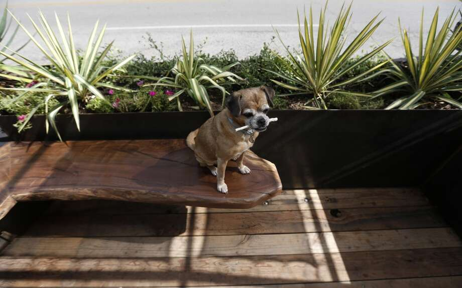 The 19th Street National Parklet. (Dog not included.) Photo: Karen Warren, Houston Chronicle