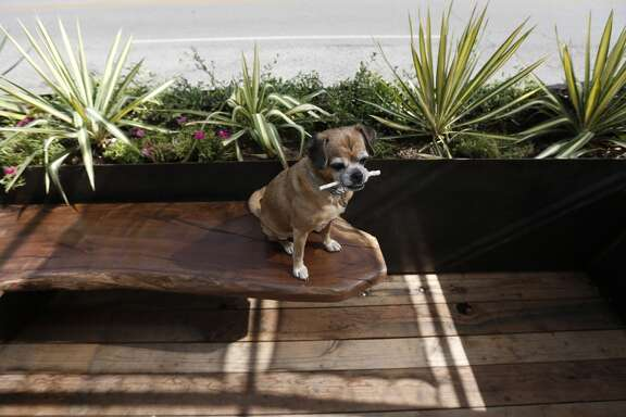 """Tilly"" the dog sits in Houston's first ""parklet"", a parking space converted into a micro-park, in front of the New Living Bedroom Store on 19th Street in the Heights, Wednesday, July 9, 2014, in Houston.  ( Karen Warren / Houston Chronicle  )"
