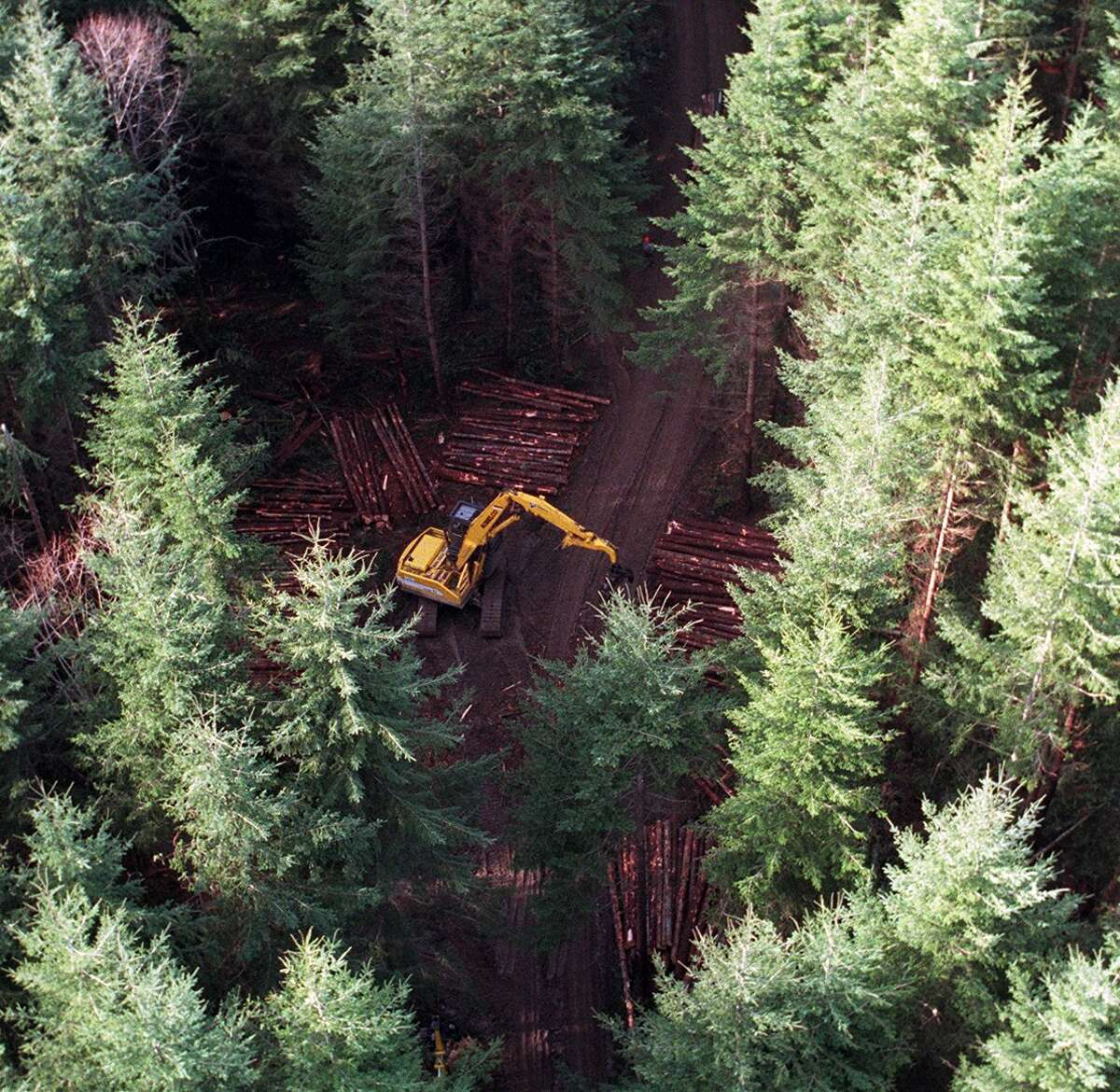 Selective logging in a Weyerhaeuser forest near Vail.