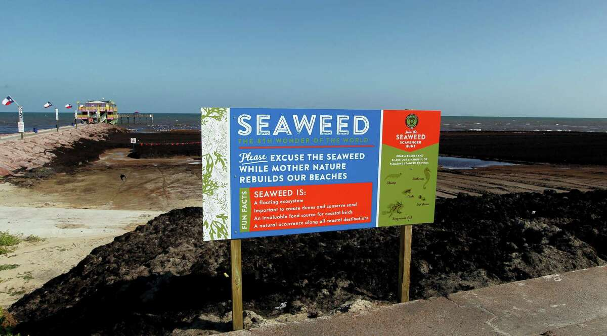 This Tuesday, July 8, 2014 photo shows one of the signs the Galveston Island Park Board of Trustees has erected near the 61st Street jetty and fishing pier in Galveston, Texas to explain the inundation of seaweed to visitors, many of whom get their first look at the Gulf, and the seaweed, via the 61st Street corridor. (AP Photo/The Galveston County Daily News, Jennifer Reynolds)