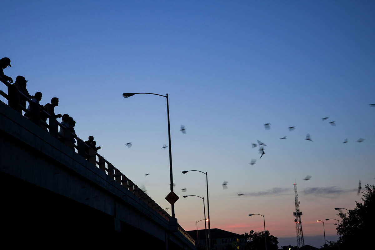 Thousands of Mexican free-tailed bats emerge from roosts under the Waugh Street Bridge over Buffalo Bayou in Houston to devour multitudes of insects, including mosquitoes, beetles, and moths. Photo credit: Kathy Adams Clark. Restricted use.
