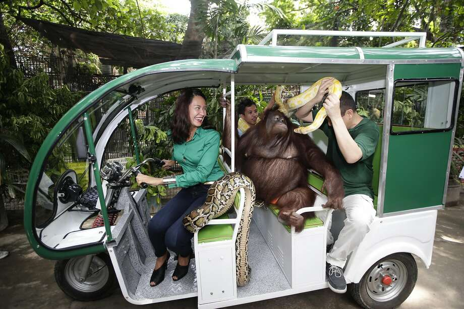 "Everybody aboard the Manny mobile: Malabon Zoo owner Manny Tangco shares the back of the zoo's new ""e-trike"" with Pacquiao the orangutan and two pythons as former beauty queen Gionna Cabrera drives. The zoo is promoting zero carbon-emission transportation to reduce pollution and benefit wildlife. Photo: Bullit Marquez, Associated Press"