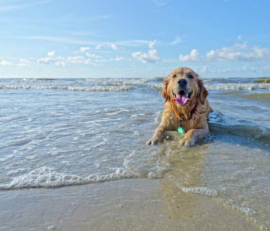 Tripswithpets.com put together a list of dos and don'ts for bringing your dog to the beach. Check out some of their rules... Photo: Galveston.com