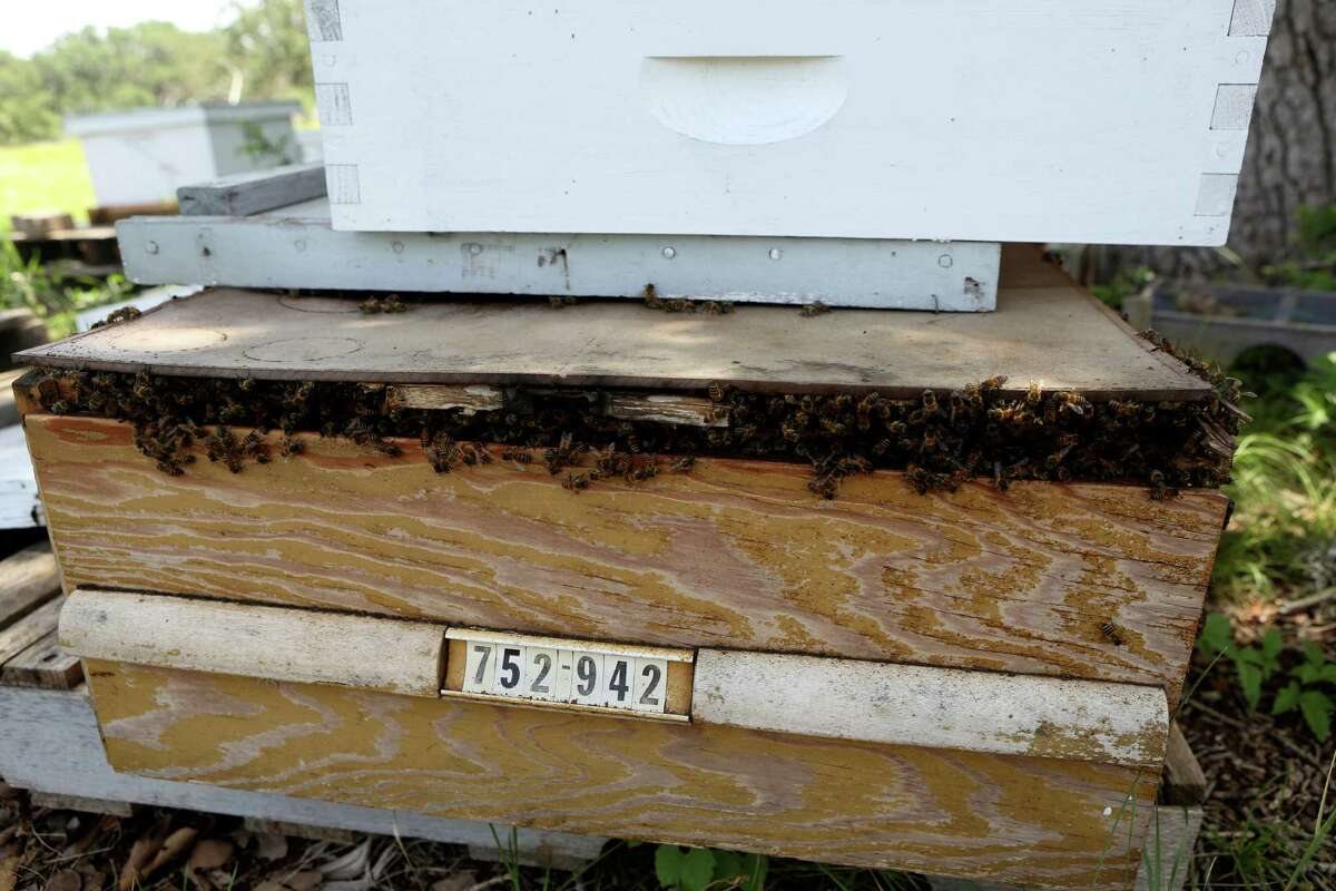 Rick Fink, president at Alamo Area Beekeepers Association, uses an old drawer as a hive for his bees.