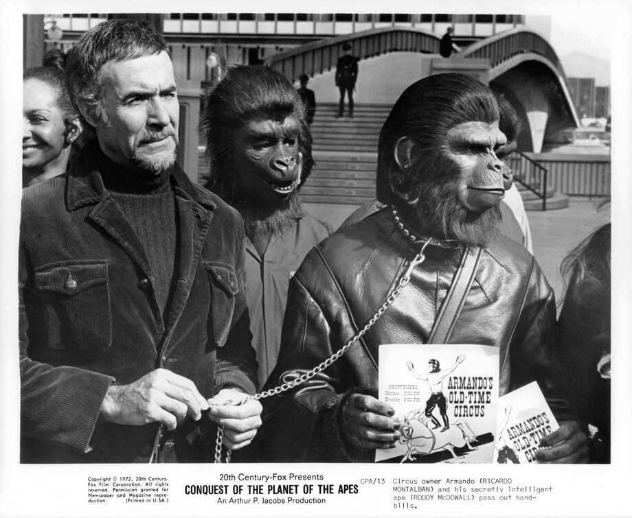 "1972: ""Conquest of the Planet of the Apes"" showed how the apes and chimps overthrew humans in the original storyline to become masters of the Earth. Sadly, Ricardo Montalban did not survive the purge. Photo: Michael Ochs Archives, Getty Images / 2012 Getty Images"