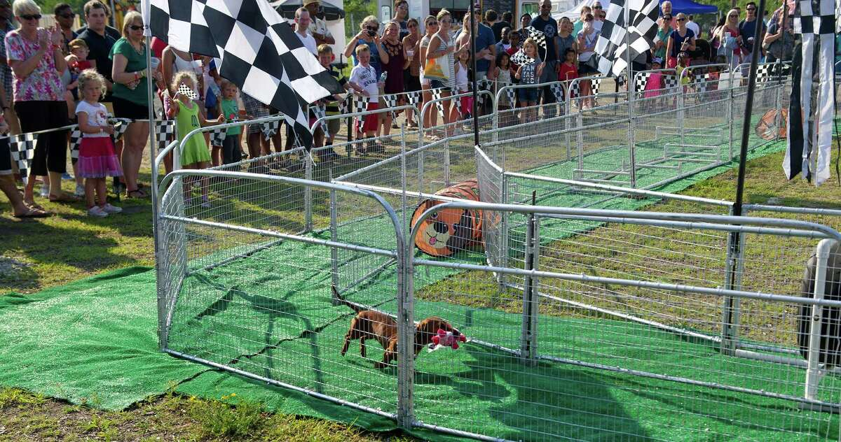 A dog takes a victory lap after winning the Hot Dog Pig Race during Saturday's Pork in the Park barbecue festival at Mill River Park in Stamford, Conn., on July 12, 2014.