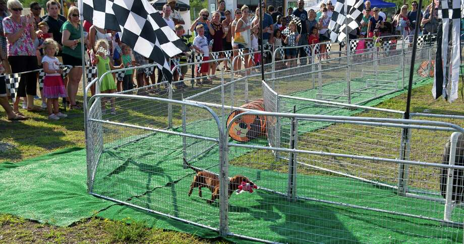 A dog takes a victory lap after winning the Hot Dog Pig Race during Saturday's Pork in the Park barbecue festival at Mill River Park in Stamford, Conn., on July 12, 2014. Photo: Lindsay Perry / Stamford Advocate