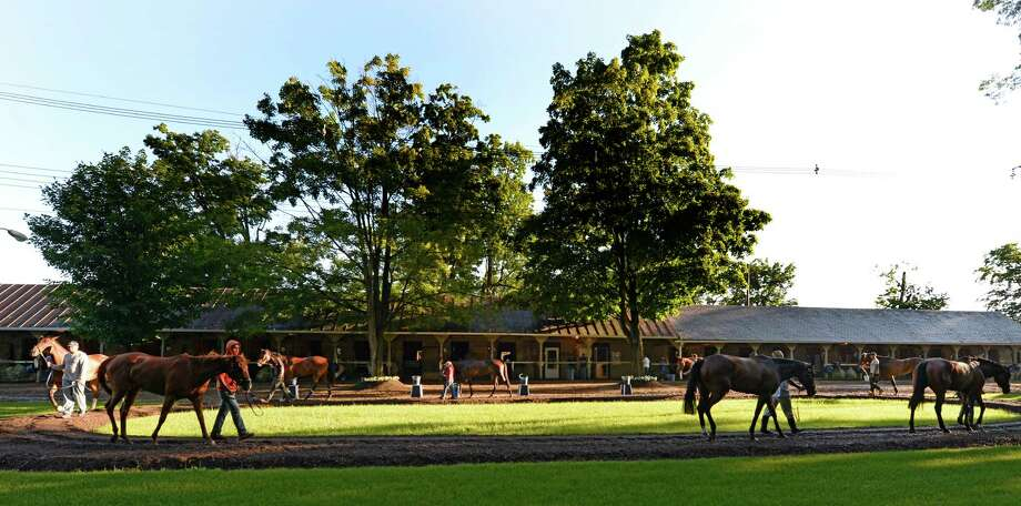 Horses cool out after their exercise in the barn area run by trainer Chad Brown Wednesday morning July 9, 2014 at the Oklahoma Training Center in Saratoga Springs, N.Y.           (Skip Dickstein / Times Union) Photo: SKIP DICKSTEIN
