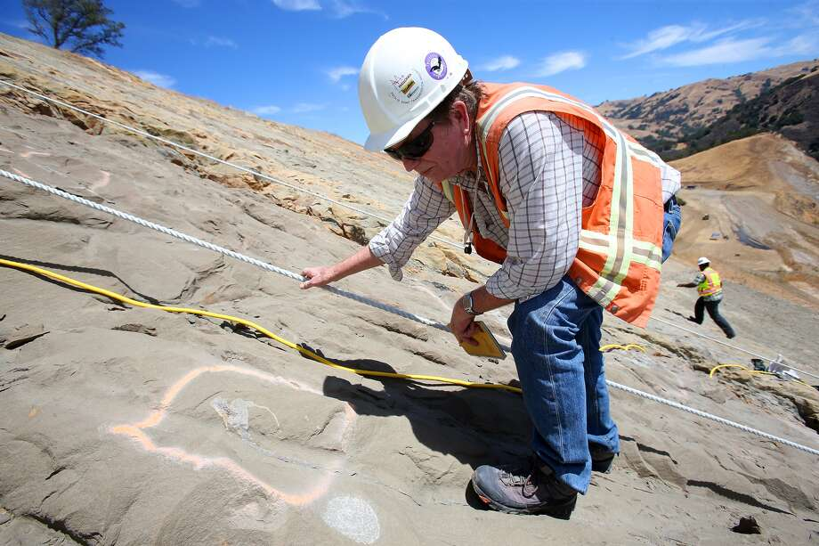 In this Monday, June 30, 2014, paleontologist Bruce Hanson looks at a Desmostylus tooth on a hillside at the Calaveras Dam replacement project in Fremont, Calif.  The Desmostylus is a hippo-like animal that is now extinct. Giant teeth from a 40-foot-long shark and portions of what could turn out to be an entire whale skeleton are among the hundreds of fossils being carefully unearthed at a dam construction site in Silicon Valley. Photo: Aric Crabb, AP  / BAY AREA NEWS GROUP2014