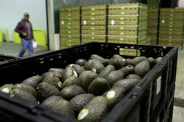Mexican avocado imports skyrocketing - ExpressNews com