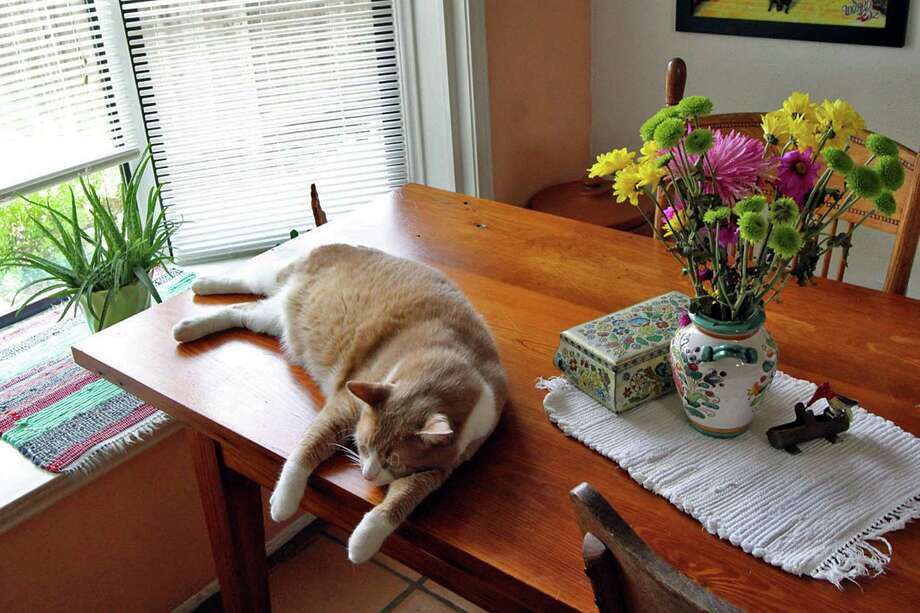 Yentyl the cat lounges on the dining table, made from floorboards from a shoe factory that was torn down in Kirksville, Missouri, Bonnie Ellison's hometown. Photo: Danny Warner, Danny Warner / For The Express-News