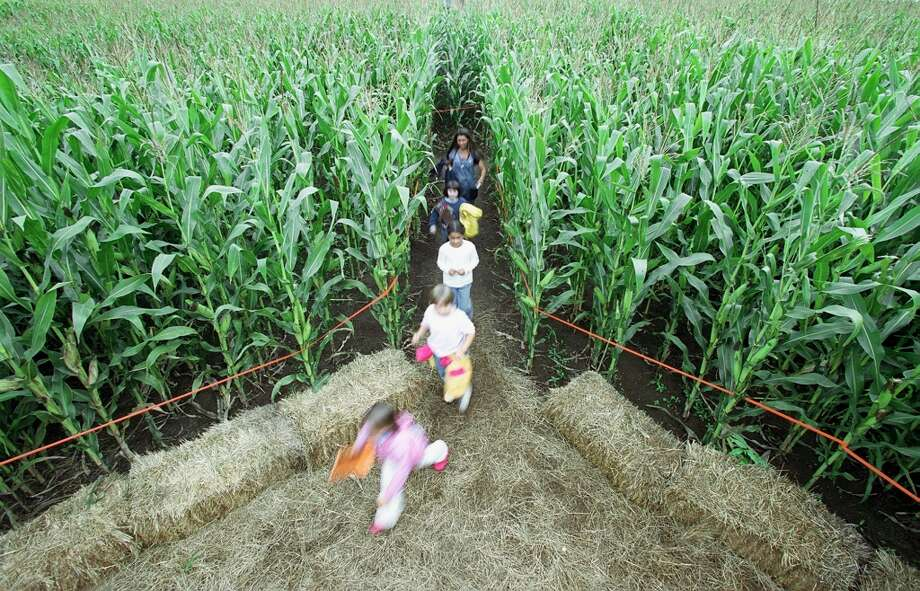 A 3-year-old boy was reportedly lost in a Utah corn maze on Oct. 10, 2017 after the boy's mother didn't realize he was missing for 12 hours. See Houston-area children who were reported missing this year up ahead. Photo: GILBERT W. ARIAS