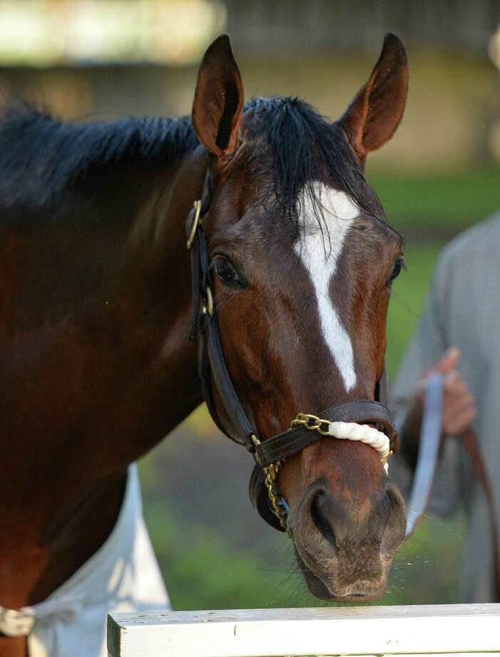 Groom Juan Gonzalez holds super filly Untapable Wednesday morning July 9, 2014 at the Oklahoma Training Center in Saratoga Springs, N.Y.           (Skip Dickstein / Times Union) Photo: SKIP DICKSTEIN