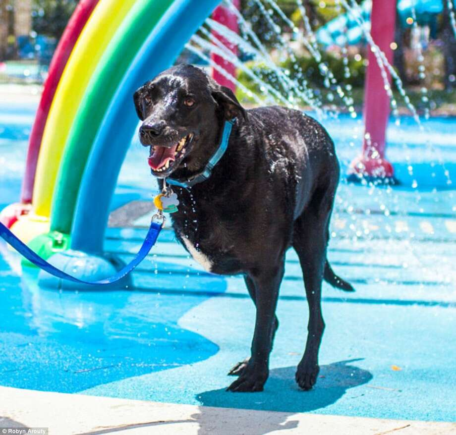 Duke shows his pearly whites while enjoying the cool water. Photo: Courtesy Of Robyn Arouty / Robynarouty.com