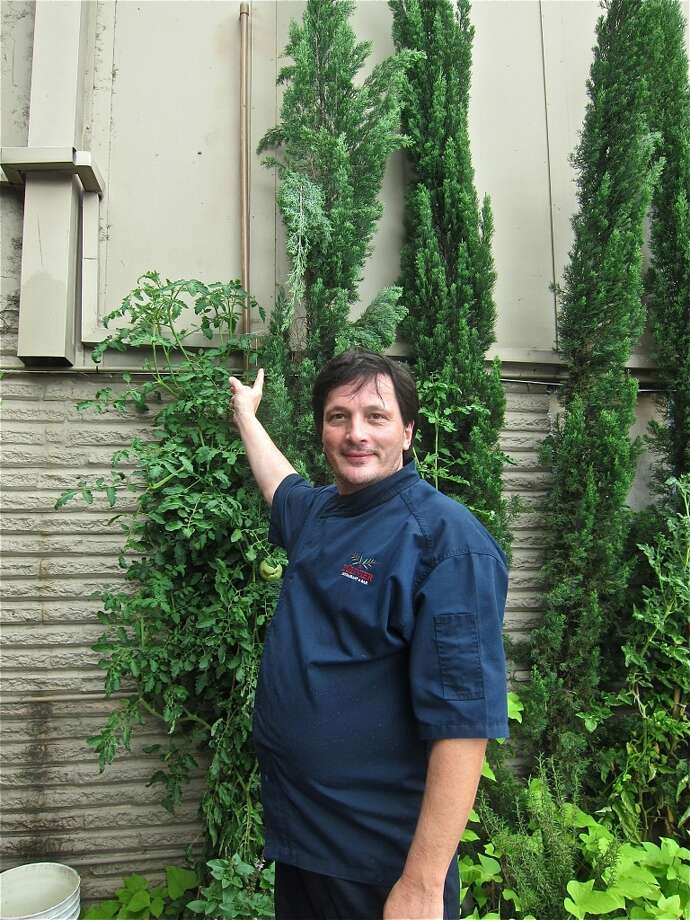 Chef Olivier Ciesielski shows off a tomato plant climbing a drainpipe in his kitchen garden outside L'Olivier. Photo: Alison Cook