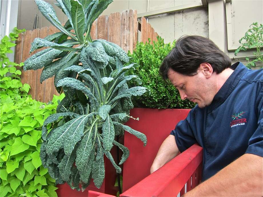 Chef Olivier Ciesielski with his prize kale plant in the kitchen garden outside L'Olivier. Photo: Alison Cook