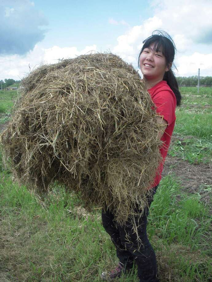 A young woman from Japan participants in the  World Wide Opportunities on Organic Farms program at Blue Lagoon Organics in Manitoba, Canada. (Photo courtesy of WWOOF)