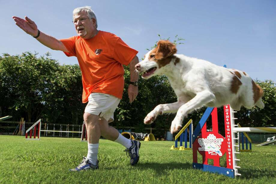 Jim Bryson works with his dog, Meg, at Leaps &  Bounds Agility Center.  Both have had health problems over the years, but they ahale and hearty now and ready to compete. ( Brett Coomer / Houston Chronicle ) Photo: Brett Coomer, Staff / © 2014 Houston Chronicle